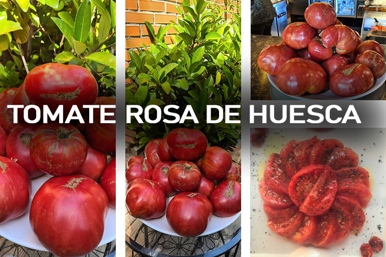 Nuestro tomate rosa de Huesca is different
